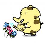 zoukirin_flower